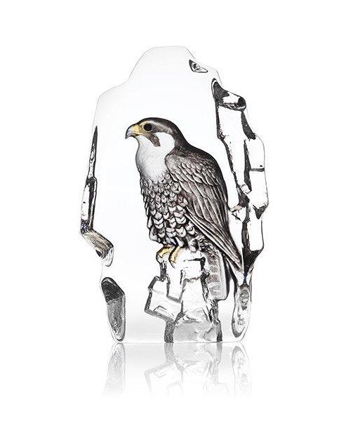 Pelegrine Falcon painted
