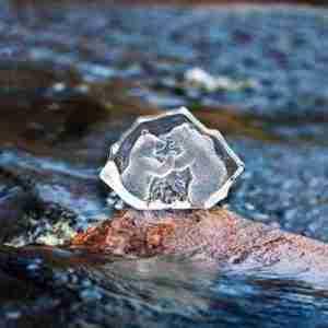 Brave Bear Arctic Wildlife Clear