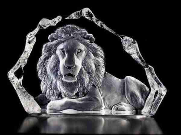 Big Male Lion Wildlife clear