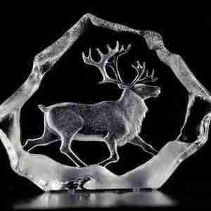 Proud Male Reindeer Wildlife clear