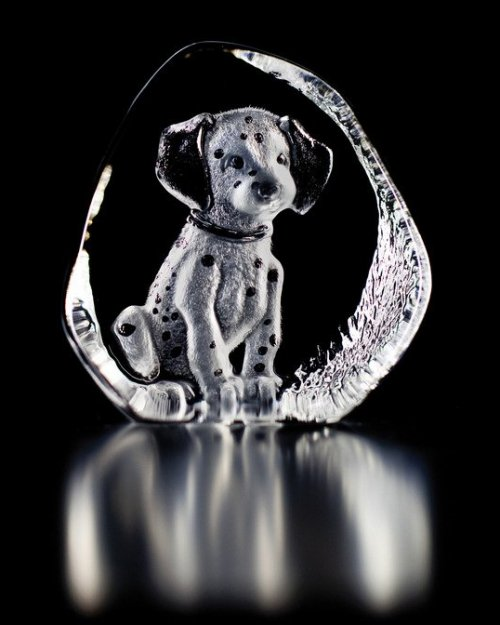 Dalmatian Puppy clear crystal