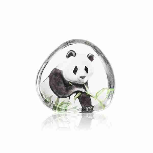 Giant Panda bear eating