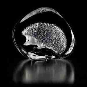 Small Hedgehog Walking