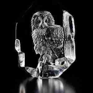 Tawny Owl Original